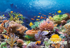 Coral Reef Fishes,Puzzle 1000 Teile